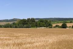 Feld mit Buschberg